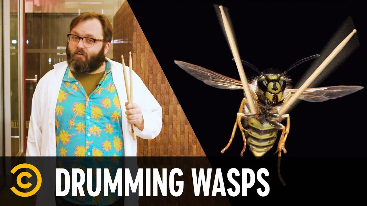 Drumming Wasps - Science?