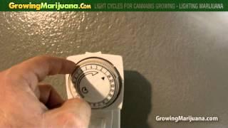Light Cycles For Cannabis Growing - Lighting Marijuana