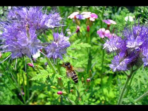 Стас михайлов полевые цветы