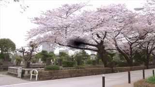 『都営青山霊園』 http://www.misatosekizai.co.jp/cemetery/details/to...