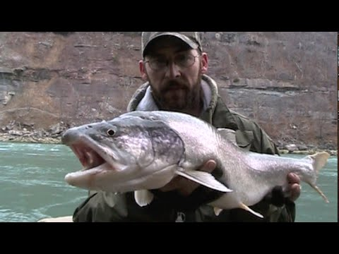 Episode 9: Niagara River Steelhead And Lake Trout : Short Session Lure Fishing