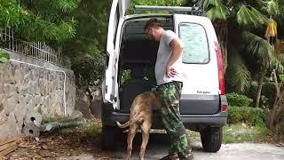 Как научить собаку залезать в машину, куда угодно....