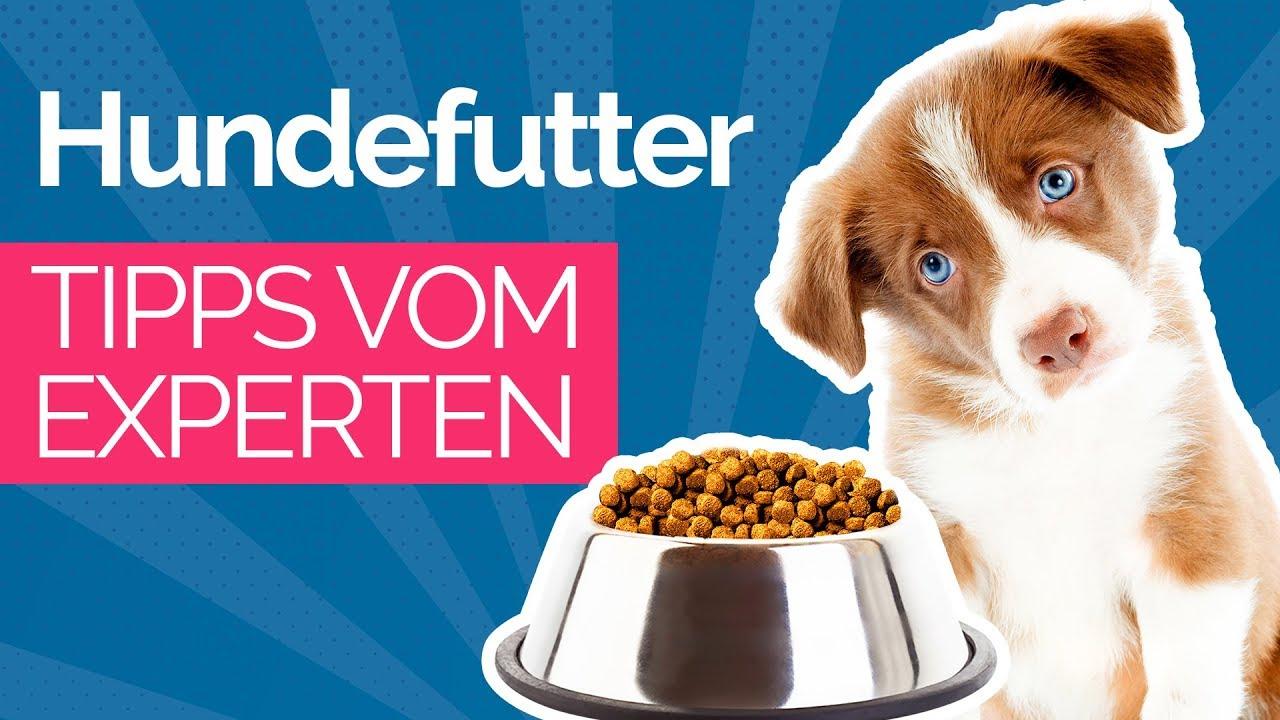 Bestes Gewichtsmanagement Hundefutter