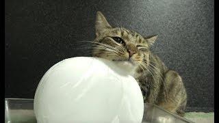 暑い日の猫の過ごし方。猫、初めて氷に触ってみた、なめてみた