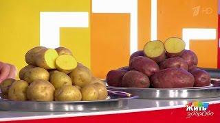 Жить здорово! Красный картофель против белого (10 02 2017)