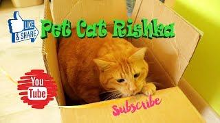 Pet cat Rishka  ペット猫リッチカ  кот Ричка international cat day