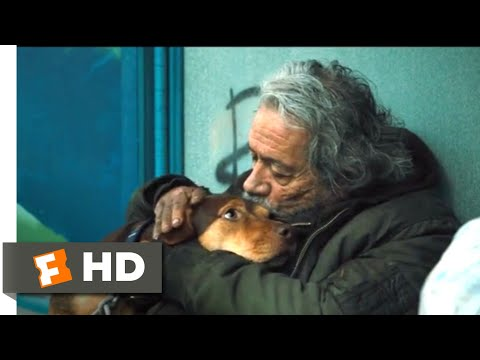 A Dog's Way Home (2018) - A Homeless Dog Scene (6/10) | Movieclips