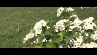 Blossom | | Summer Thumbnail