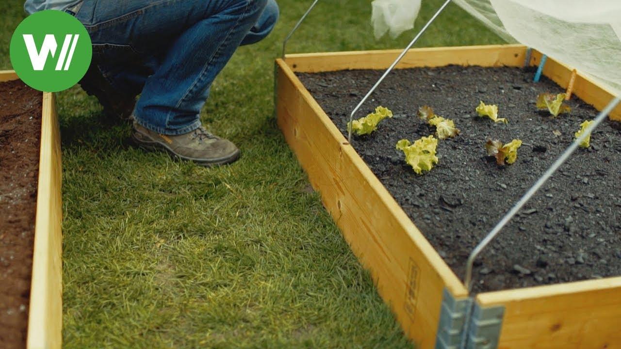 Samen vorziehen und Frühbeet anlegen - Anleitung vom Gartenprofi ...