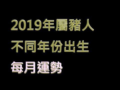 ☯️2019年屬豬人不同年份出生的🐖全年運勢大全[2019年🐖每月運勢][純文字]