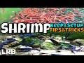 Tips and Tricks How to Keep, Setup and Breed Freshwater Aquarium Shrimp for Neocaridina and Caridina