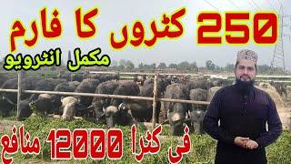 katta farming in Pakistan 2019 in urdu/ کٹا فارم بنانے کا طریقہ / katta farm bnane Ka tariqa