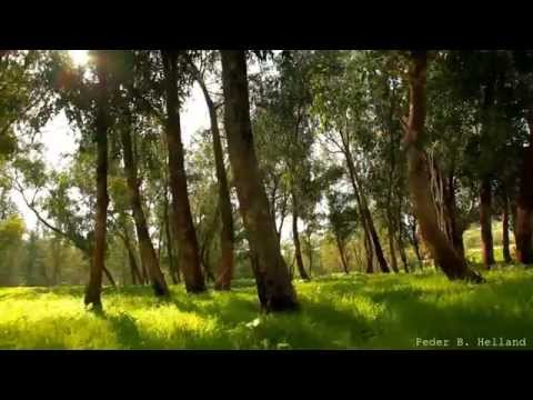Beautiful Nature Video Relaxing Music - Echoes of the Fores
