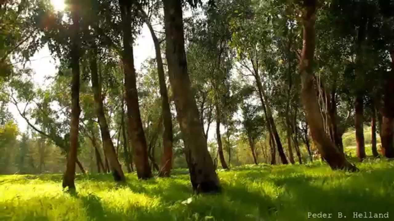 Beautiful Nature Beautiful Nature Video Relaxing Music Echoes Of The Forest Hd