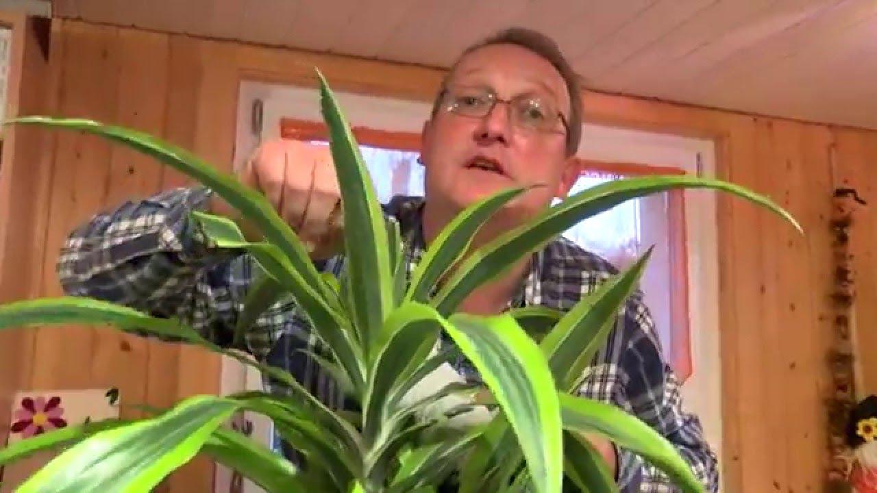 les plantes qui purifient votre bureau youtube. Black Bedroom Furniture Sets. Home Design Ideas