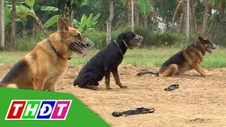 Những người bạn bốn chân   Tập 5: Chó làm cảnh sát   THDT