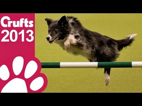 Agility - Kennel Club British Open - Jumping - Crufts 2013