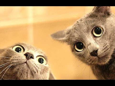 Funny Videos – Funny Cat – Funny – Funny Animals Videos – Funny Dogs 2015