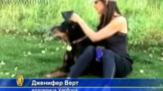 Обнаружена собака с рекордно длинными ушами  Смотреть онлайн   Видео   bigmirnet