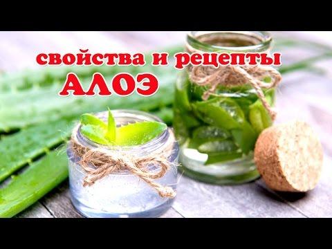 АЛОЭ лечебные свойства и Рецепты!