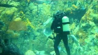 HK Ocean Park - The Grand Aquarium