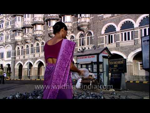 A woman feeding grain to pigeons
