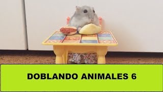 Doblando Animales 6