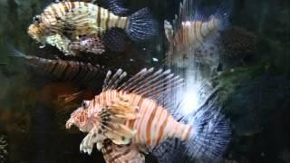 Океанариум в Дубай Молле. ОАЭ(Один из самых больших океанариумов мира расположен в торгово-развлекательном центре «Дубай Молл». В нем..., 2015-10-17T11:41:59.000Z)