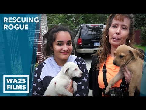 Puppies Abandoned Rescued by High School Girl: Ep #8 Rescuing Rogue w Detroit Pit Crew