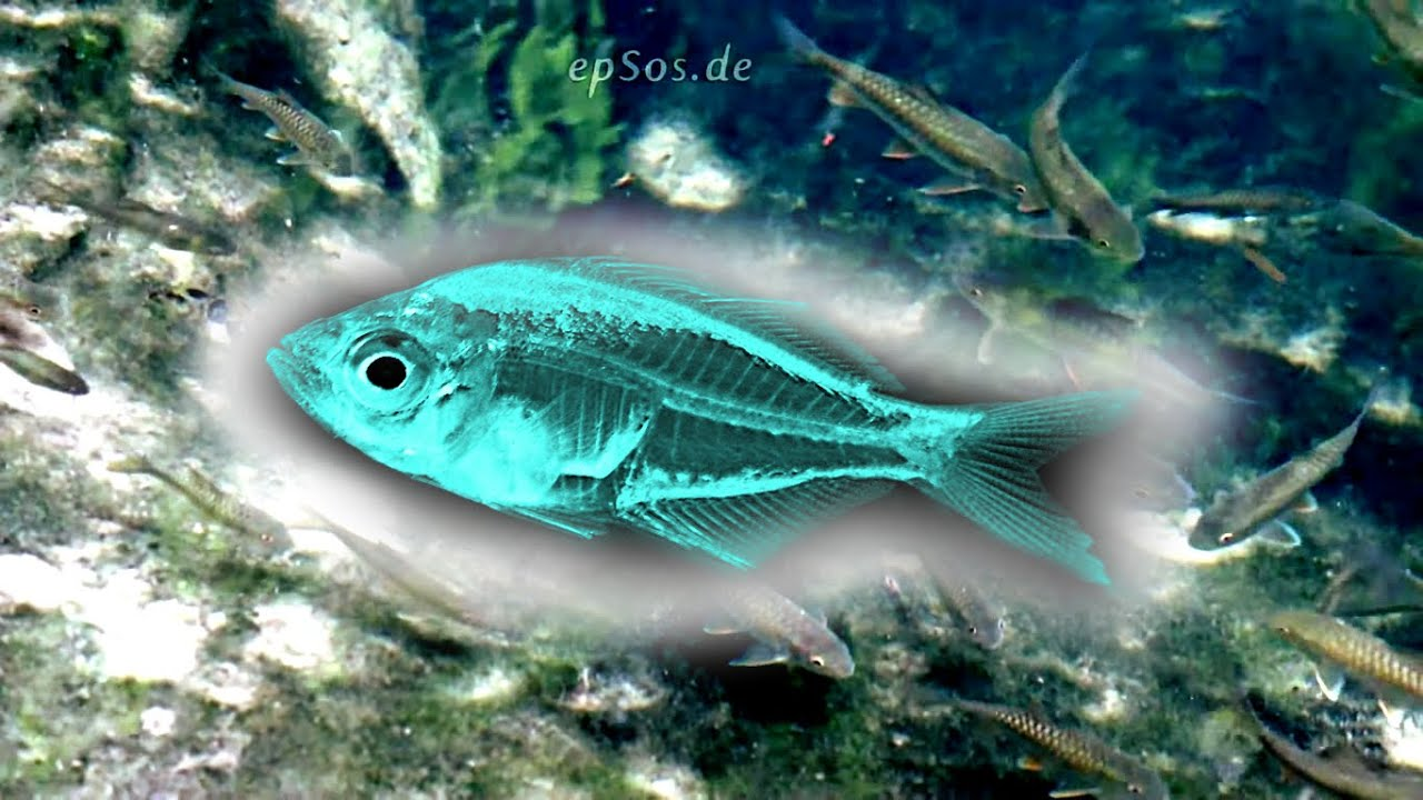 Many fish swim in the sea select one youtube for How many fish are in the ocean