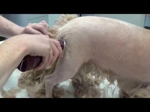 Вопрос: Чем лучше стричь собаку ножницами или машинкой для стрижки?
