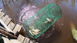 Рыбалка На Кубарь Морду Вершу Карась Жиробас