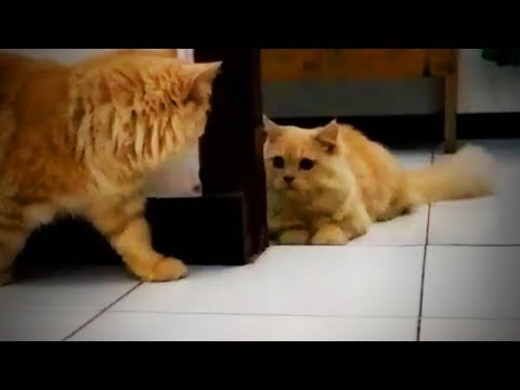 Cute and Funny Pets 😍 Funny Pets Playing (Full) [Funny Pets]