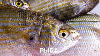 Полезна ли рыба, которую мы едим?