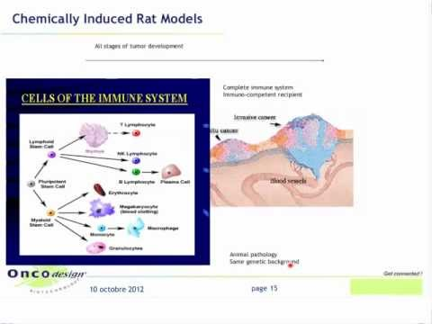 Rat Cancer Models in Oncology