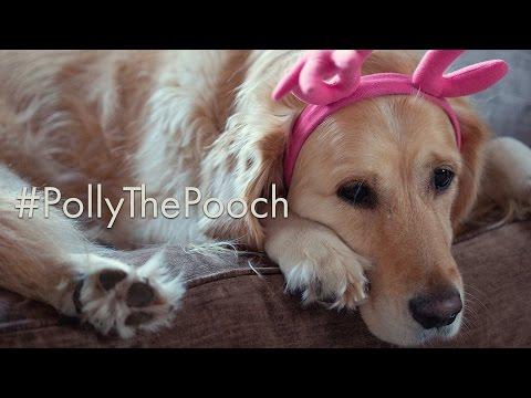 #PollyThePooch John Lewis Parody Advert 2016 (Prezzybox.com)