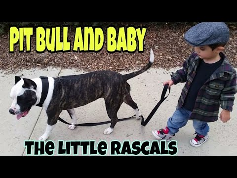 Pit Bull Dog and Baby, The Little Rascals, Pitbull Dogs, A Boy and his Dog