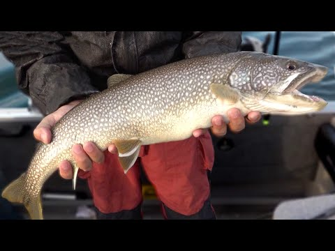 Fantastic Lake Trout Fishing In Cheboygan