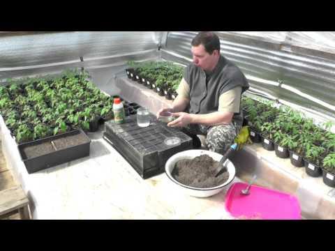 Защищаем капусту от болезней начиная с посева
