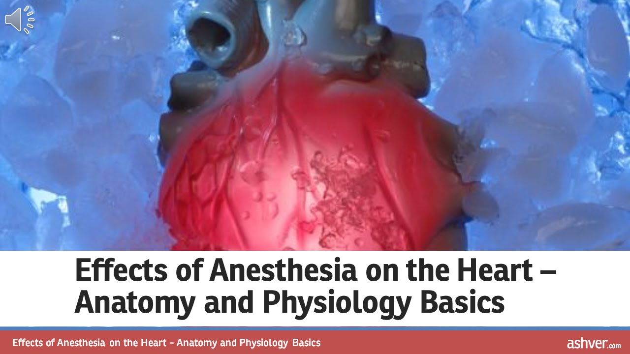 Effects of Anesthesia on the Heart - Anatomy and Physiology Basics ...