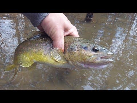 Mepps Spinner Fishing Setup