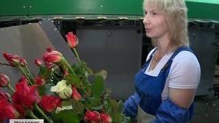 В Мордовии динамично развивается цветочное агрохозяйство