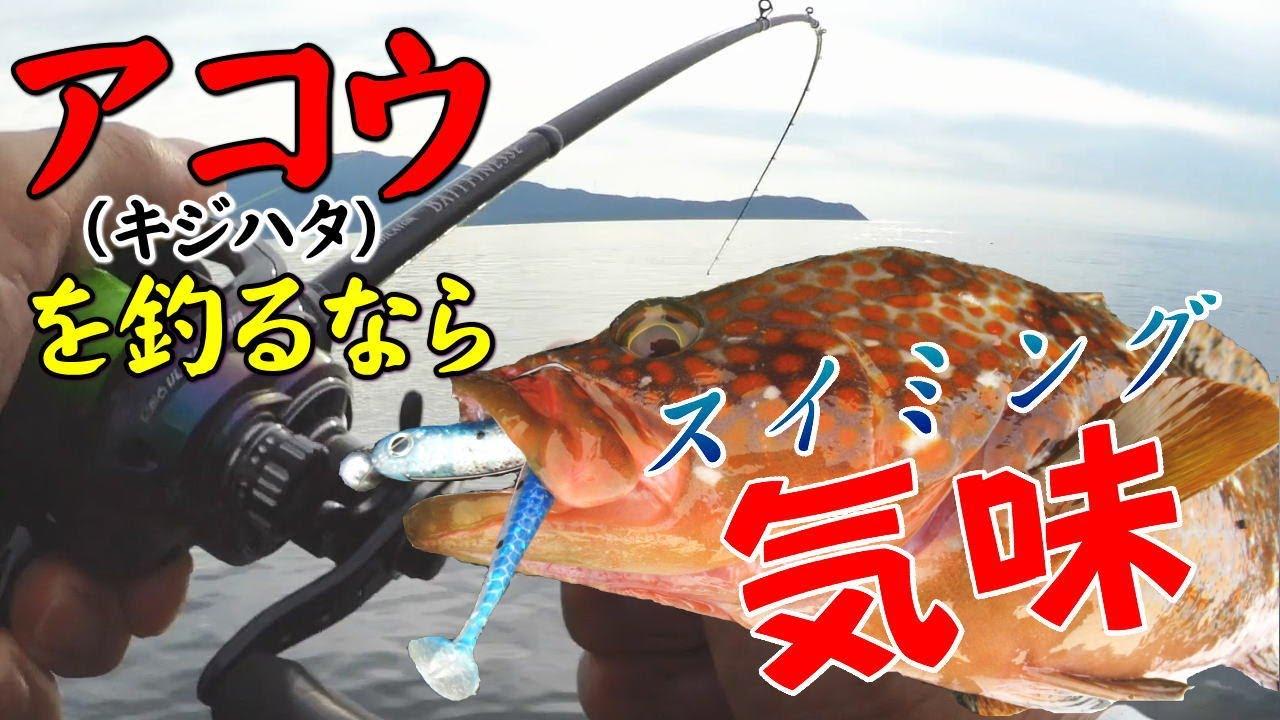 アコウ(キジハタ)を釣るなら【スイミング気味釣法】で決まり!アコウ以外にもガシラや青物など様々な魚が釣れて面白い!!