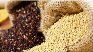 SEED BREEDERS ECONOMY: Maize has highest attraction