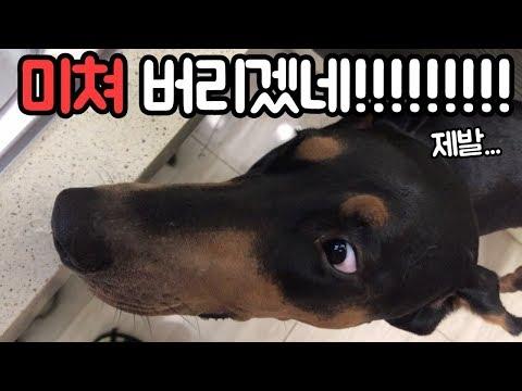 보양식을-본-강아지,고양이-반응!-보양식-리얼사운드-먹방-[집돌이]