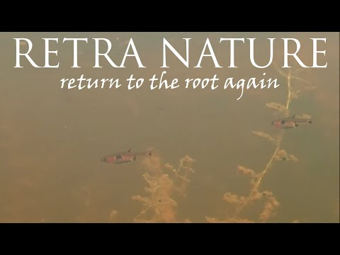 Biotope Aquarium: My visit to peat swamp forest of Peninsular Malaysia