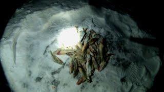 СЕЛЬСКАЯ рыбалка на реке ДОН Проверка КРЕСТОВ зимние донки 09 02 2021г