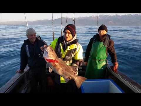 Kaikoura Fishing Charter 26 May 2017