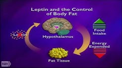 hqdefault - How Does Diabetes Affect The Body On A Cellular Level