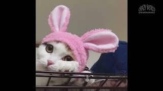 Приколы с котами и кошками 2018 #3  Подборка самых смешных видео с котами и кошками